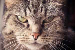 animal animal portrait animal world annoyed