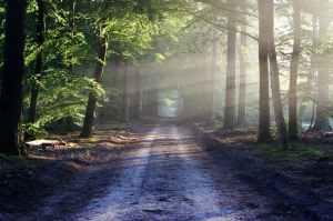 light road landscape nature